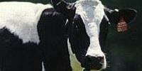 Китай скасував ембарго на імпорт яловичини із Бразилії