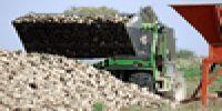 Прогноз виробництва цукрового буряку в Євросоюзі знижено до 72,7 млн тонн