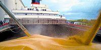 Импорт зерна в Китай упал в сентябре на фоне торговой войны с США и высоких мировых цен