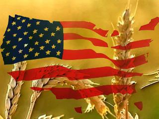 Експортні ціни на пшеницю, кукурудзу, сорго в США (USD/MT, FOB порти), 21.12.2018