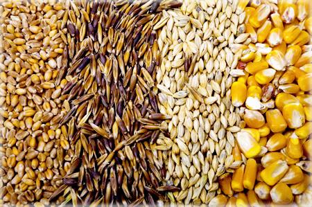 Короткий огляд світового ринку фуражного зерна