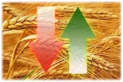 Експортні ціни на зернові та олійні: Щотижневий бюлетень, 06.12.2018