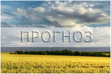 Прогноз урожаю 2019 в Україні (травень)
