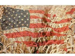 Експортні ціни на пшеницю, кукурудзу, сорго в США (USD/MT, FOB порти), 15.03.2019