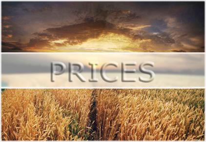 Експортні ціни на зернові та олійні: Щотижневий бюлетень, 10.01.2019