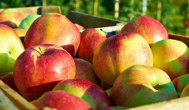 В наступному сезоні врожай якісного яблука в Україні зросте