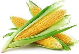 IGC снижает прогноз по глобальному урожаю кукурузы в 2019/20 МГ